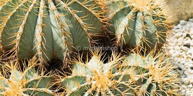 klik hier www.mypalmshop.nl